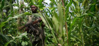 RDC: les ONG protestent contre la nouvelle flambée de violences au Kasaï