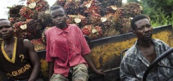 Huile de palme en RDC: face à Feronia, des communautés villageoises saisissent les banques de développement
