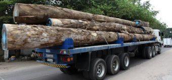RDC: 499 camions chargés de bois rouge congolais saisis en Zambie