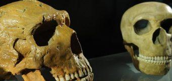 L'homo sapiens est 100.000 ans plus vieux qu'on le pensait